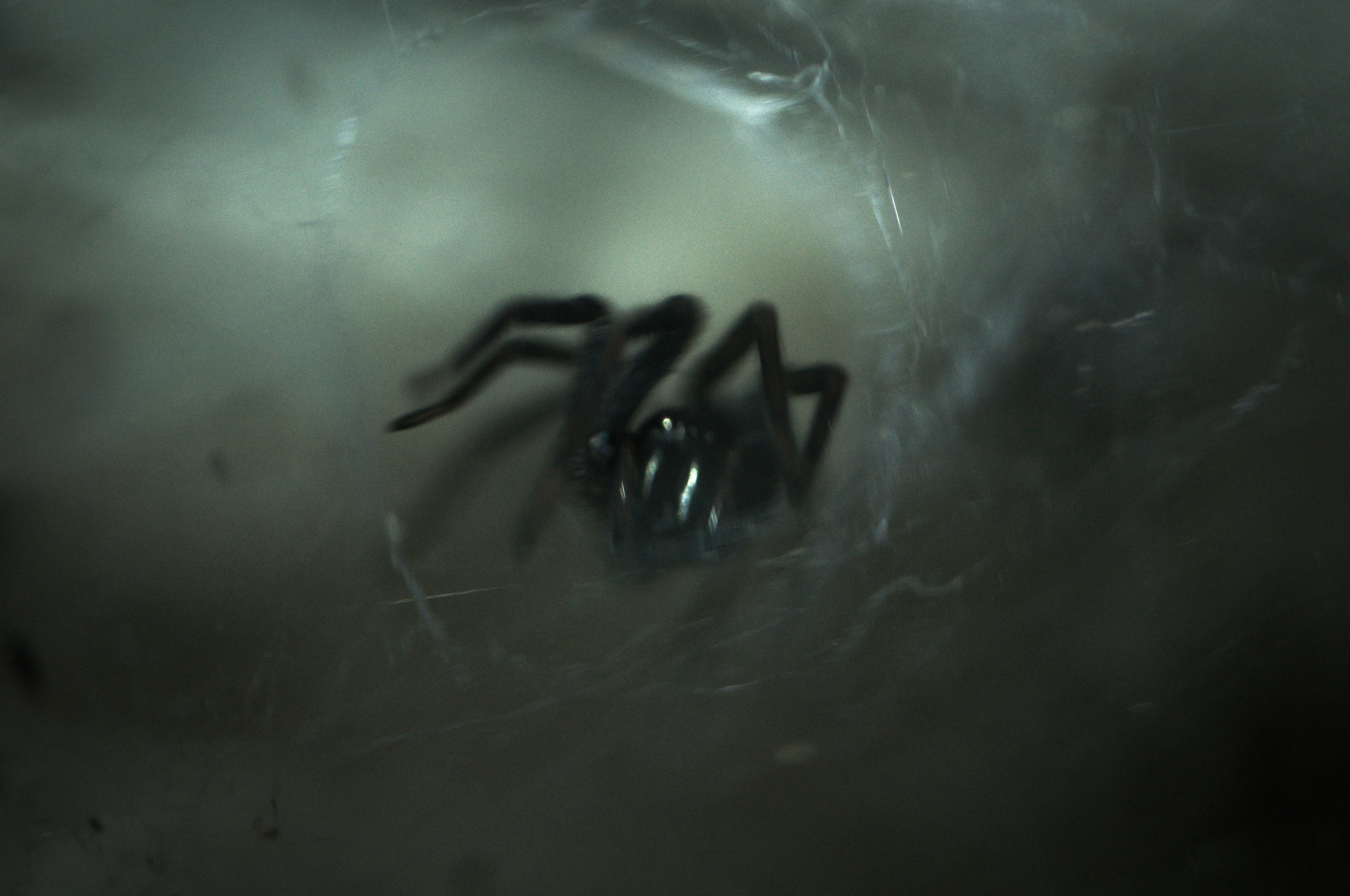 Miedo a Araña Aracnofobia