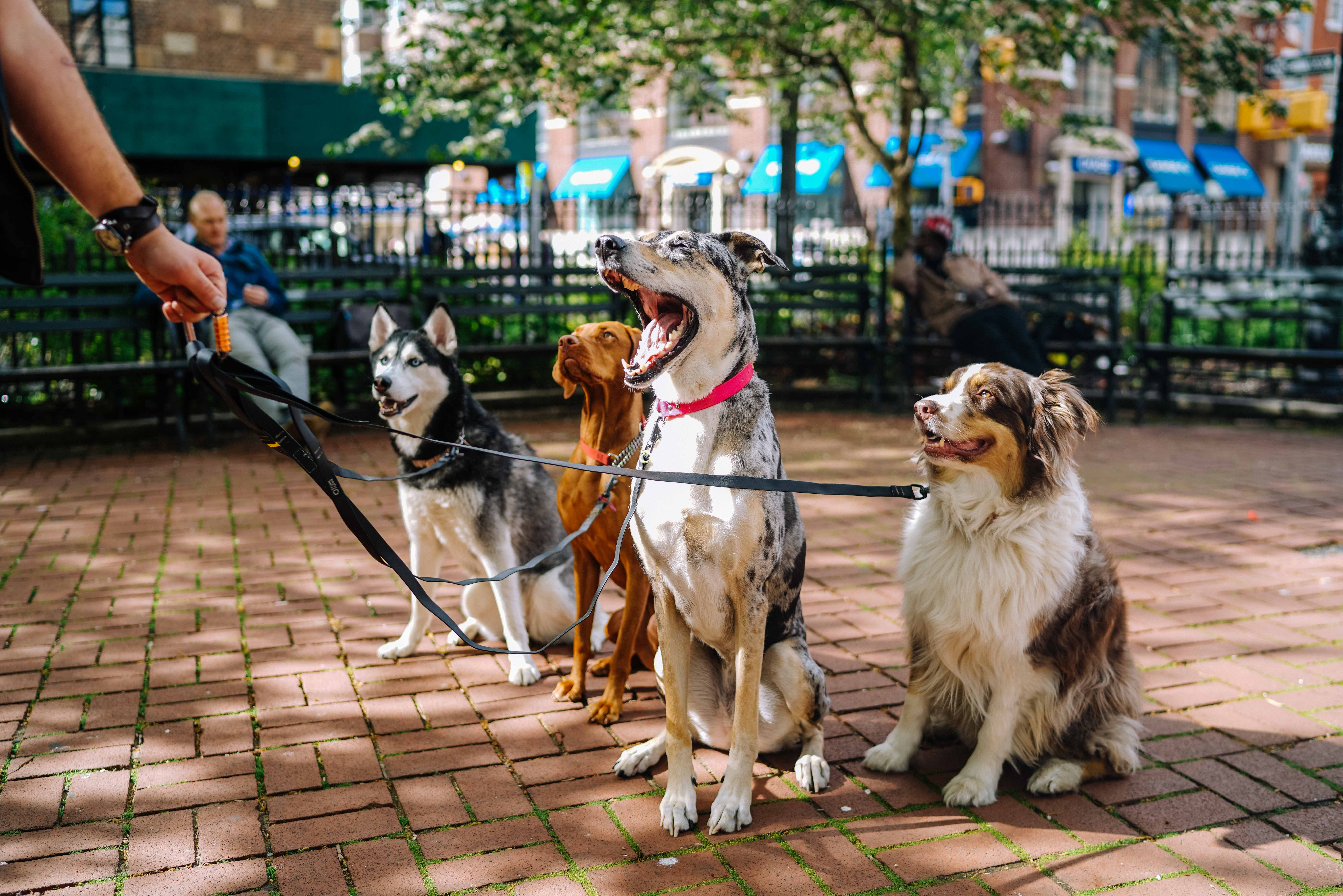 Miedo a Perros o Cinofobia